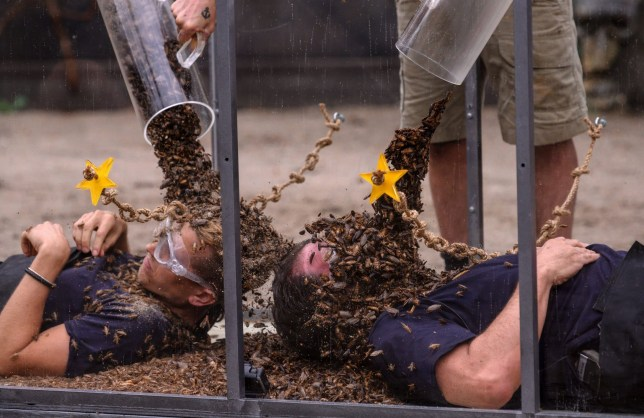 STRICT EMBARGO - NOT TO BE USED BEFORE 22:30 GMT, 22 NOV 2018 - EDITORIAL USE ONLY Mandatory Credit: Photo by James Gourley/ITV/REX (9989959at) Bushtucker Trial: Unleash The Beasts - James McVey and Nick Knowles 'I'm a Celebrity... Get Me Out of Here!' TV Show, Series 18, Australia - 22 Nov 2018