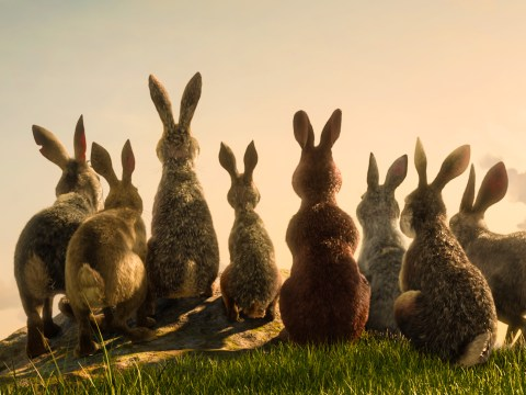 Who sings the Watership Down theme song and what's it called?