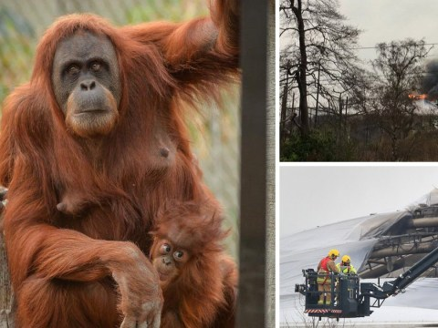 All orangutans safe after huge fire sparked mass evacuation at Chester Zoo