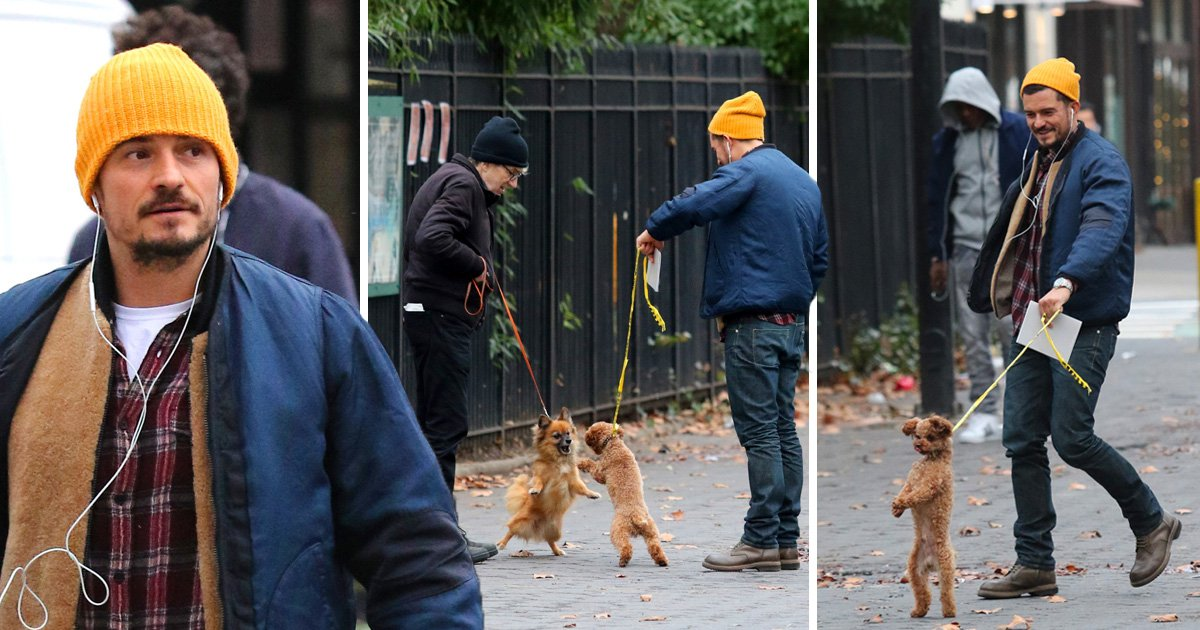 Orlando Bloom can't help but laugh at little dog Mighty who gets into scrap while out on walk