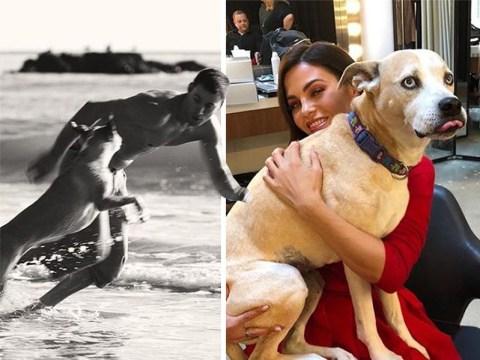 Channing Tatum and Jenna Dewan heartbroken over dog Lulu's death
