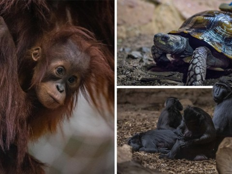 Chester Zoo release first photos of animals in new homes after fire