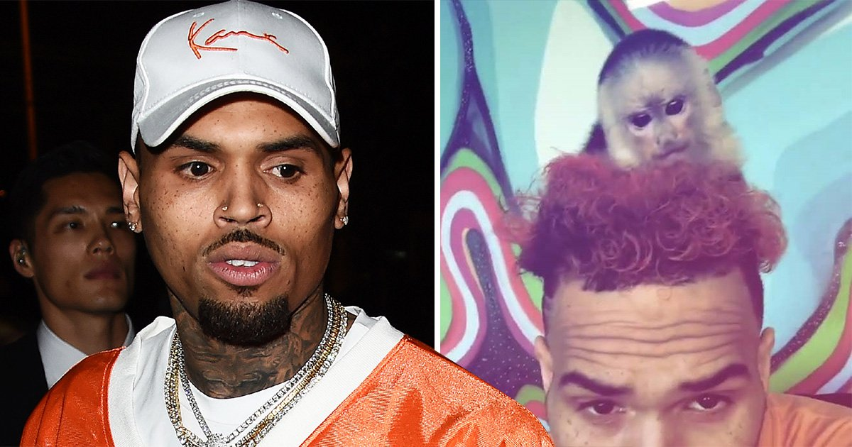 Chris Brown 'denies owning pet monkey Fiji' as singer faces charges and jail sentence