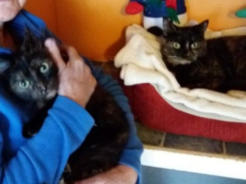 Cats left to die after being abandoned in locked dog cage