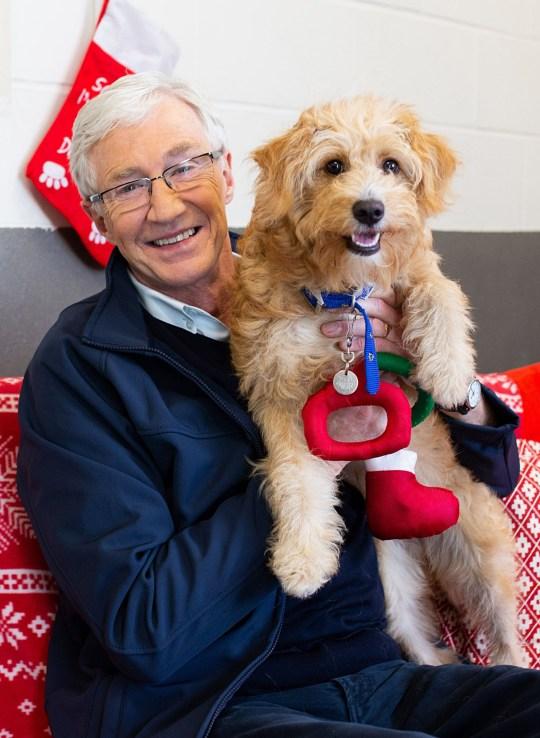 Paul O'Grady left heartbroken over 'tiny puppies with broken legs