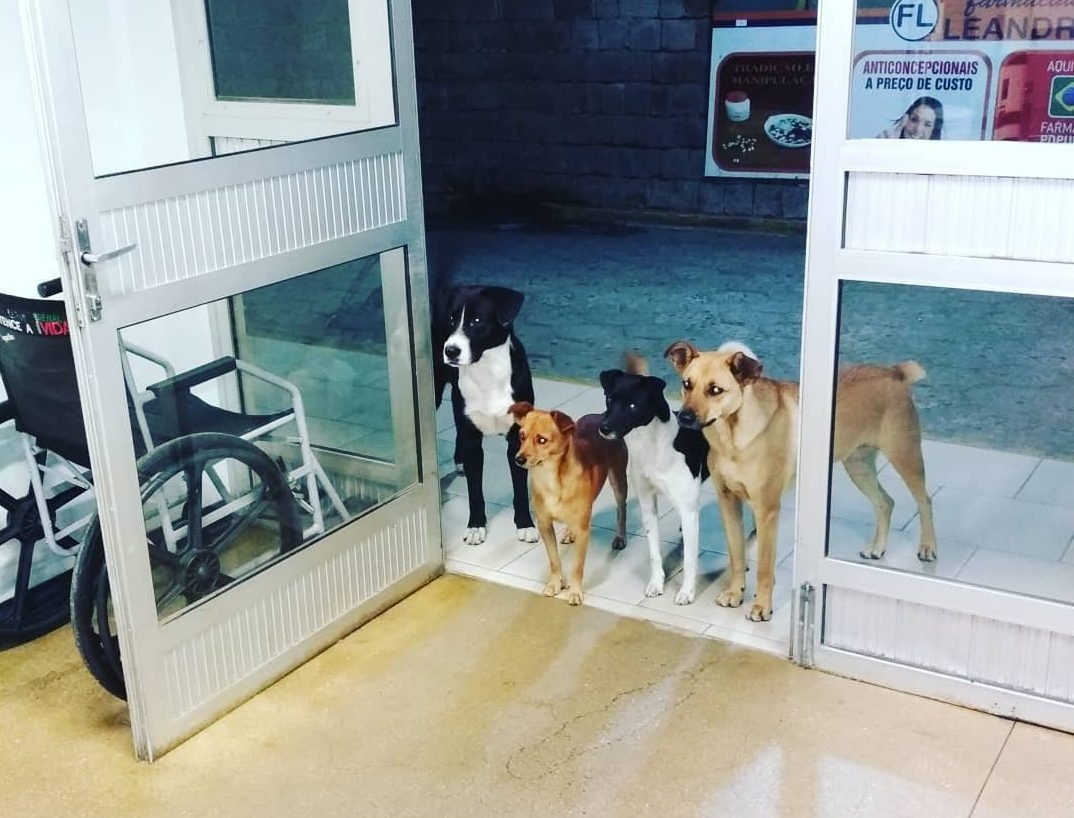 Faithful dogs wait patiently at hospital door as homeless owner is treated