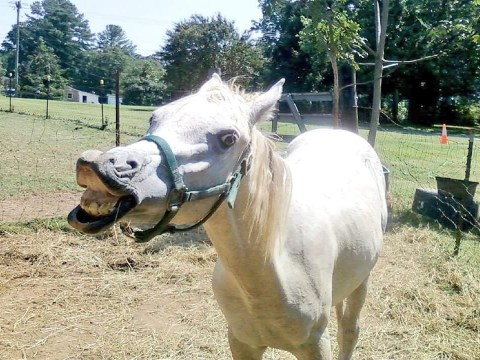 Meet Tango the incredibly stupid horse who loves his snackies