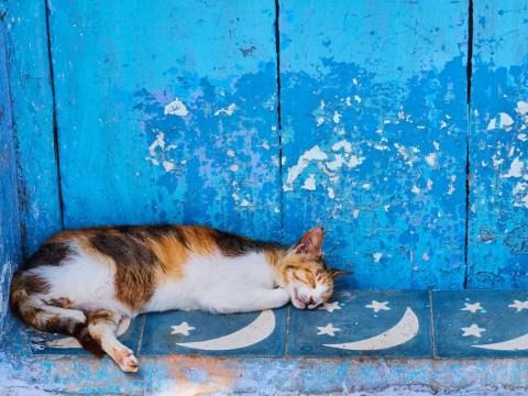 Stunning photos celebrate street cats around the world