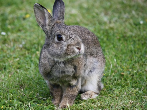 Teacher sparks outrage by asking for dead rabbits for children to skin