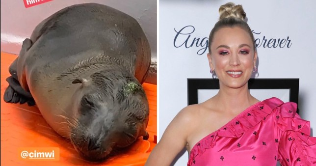 Kaley Cuoco gives update on baby seal she rescued