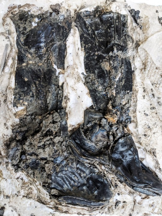 - Picture of late 15th - early 16th century boots found during the conservation process TRIANGLE NEWS 0203 176 0089 // contact@trianglenews.co.uk By Rosaleen Fenton Archaeologists excavating a sewer have uncovered the skeleton of a medieval man still wearing a pair of extremely well preserved thigh-high leather boots. The man discovered lying face-down deep in the muddy banks of the Thames is believed to have died around 500 years ago. Although detailed investigations have yet to be carried out, the watery grave of the long-lost soul means his unusual leather boots give many clues to his life, thanks to the river silt preserving him. *Full copy filed via the wires/Triangle News*