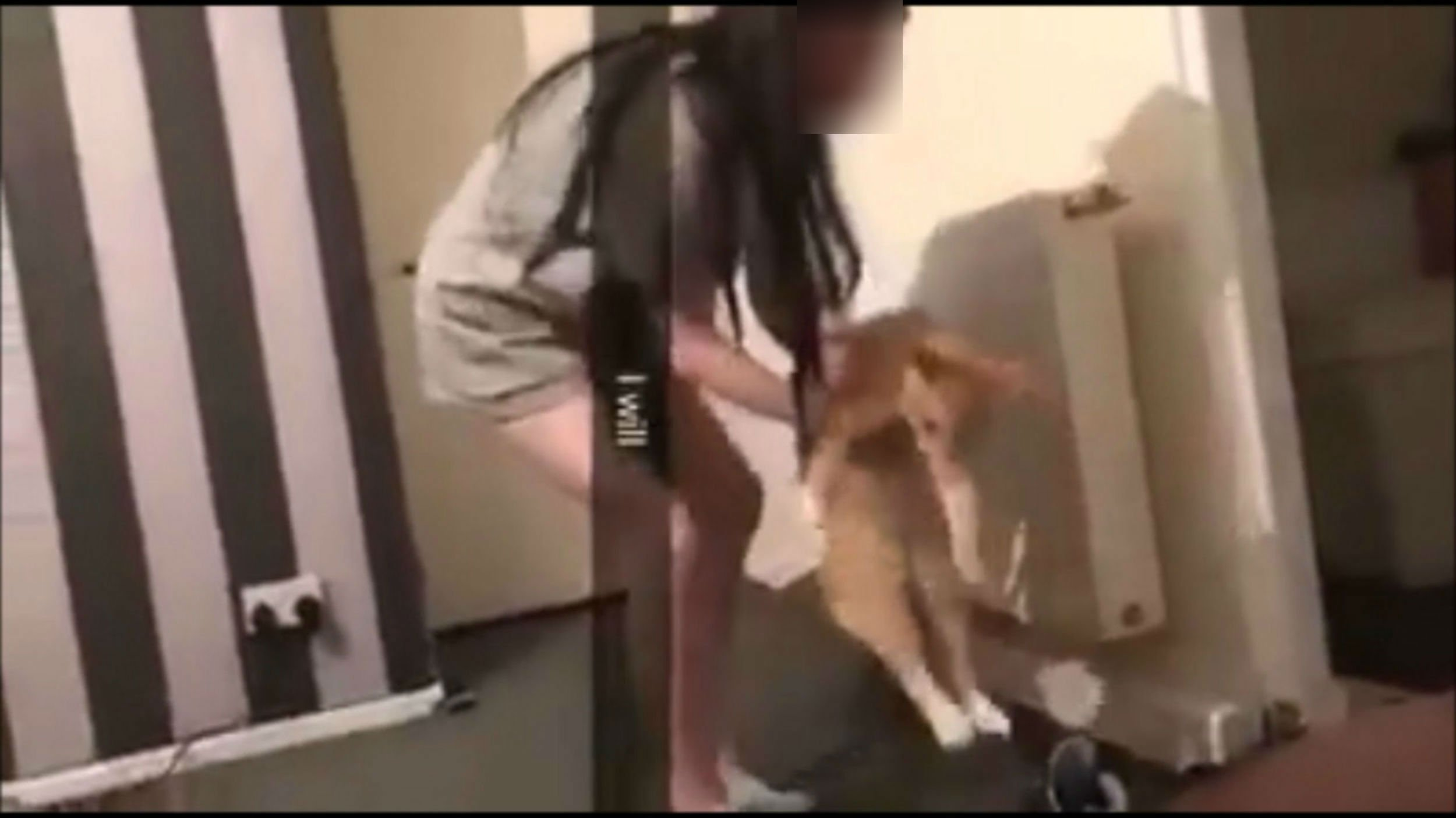 """TWO Aberdeen teenagers are facing threats of violence after video emerged which appeared to show them mistreating a cat. The clip shows one of the girls appear to hurl the cat towards a wall, after which it crouches under a heater. The same animal is then thrown towards the camera. After the video - which is said to be a """"couple"""" of years old - was posted to Facebook on Saturday, viewers reacted with disgust. And the two girls named in the post, who are thought to be 17 or 18, have now received online threats including to break both their knees. Another said they hoped someone put the girl in the video """"six feet under"""". The clip was posted to Facebook last Saturday by Aberdeen community page, Aberdeen Guardians."""