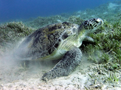 Climate change is turning turtles female, claim scientists