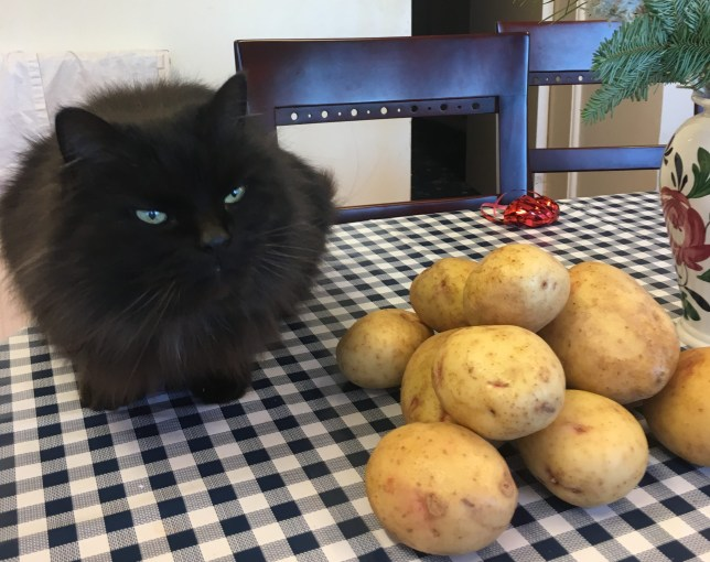 oliver the cat keeps stowing away on potato truck