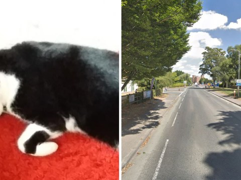 Hunt for two women who laughed as they kicked cat 'like a football'