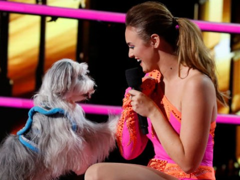 Britain's Got Talent winner Ashleigh axed from America's Got Talent: The Champions as she returns with new dog after Pudsey's death