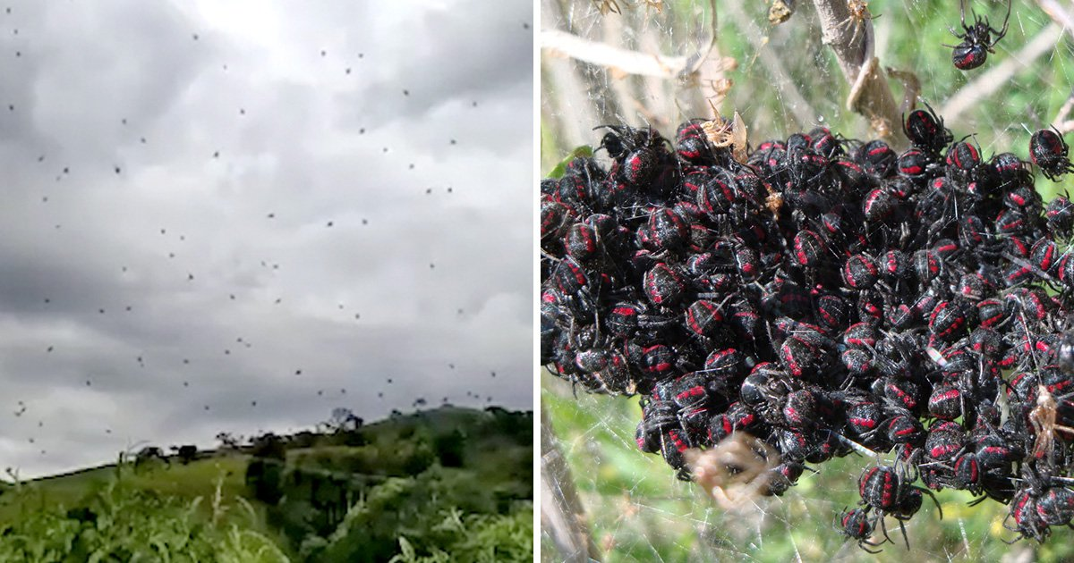 Boy left terrified as sky starts 'raining with spiders' in Brazil