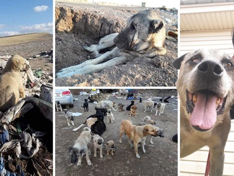Thousands of dogs are left to die at this Turkish landfill every year