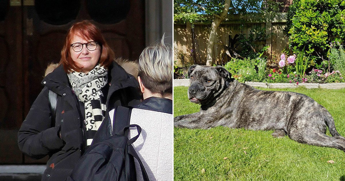 'Keyboard warrior' to pay £100,000 for falsely accusing woman of kicking her dog