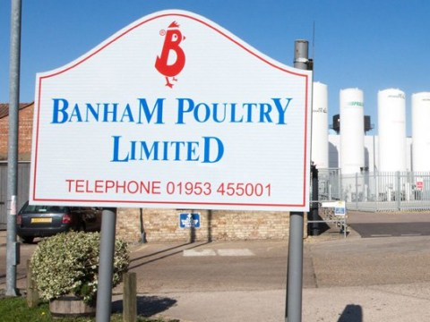 Neighbours trapped in homes 'because of rotting flesh stench' at chicken factory