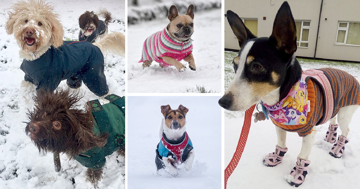 These dogs are enjoying the snow more than anyone