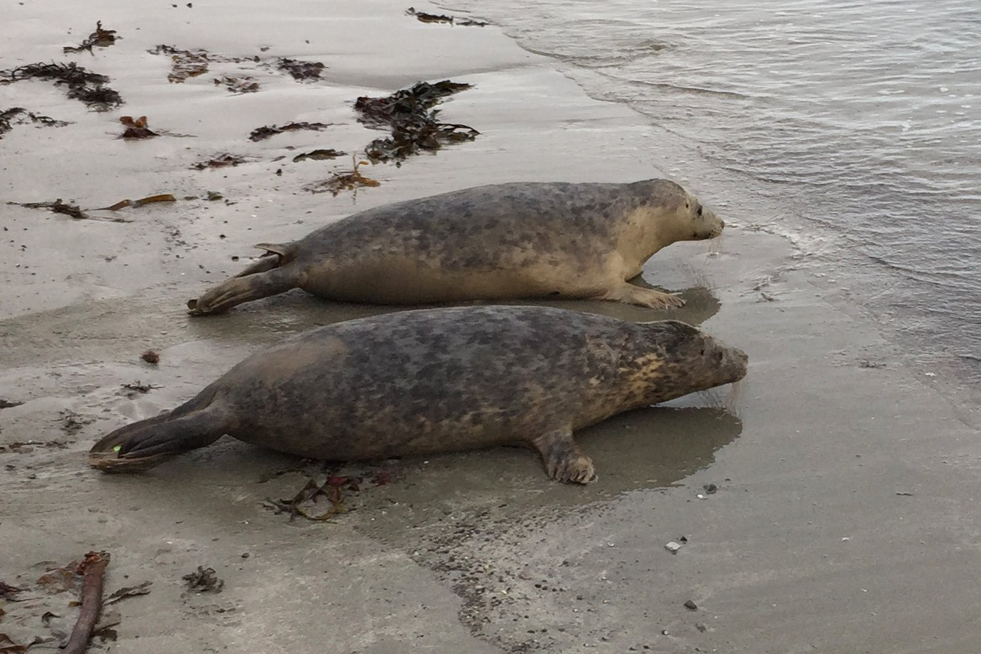 Seal pups given emotional send off as they return to the wild