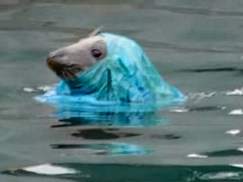 Seal tangled in plastic bag highlights mammoth task we face to clean our oceans