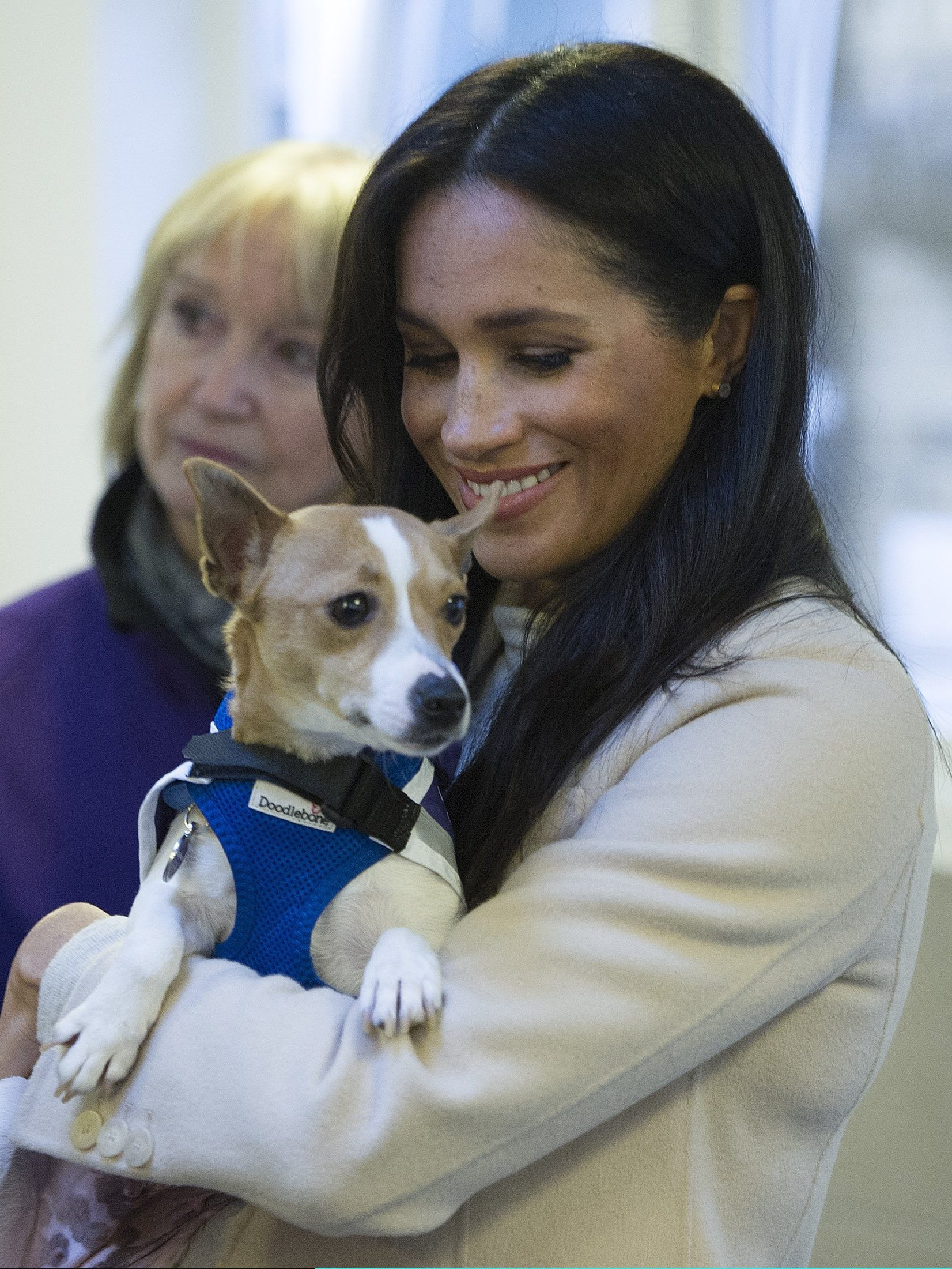 """LONDON, ENGLAND - JANUARY 16: Meghan, the Duchess of Sussex meets a Jack Russell called """"Minnie"""" during her visit to the Mayhew, an animal welfare charity on January 16, 2019 in London, England. This will be Her Royal Highnesses first official visit to Mayhew in her new role as Patron. (Photo by Eddie Mulholland - WPA Pool/Getty Images)"""