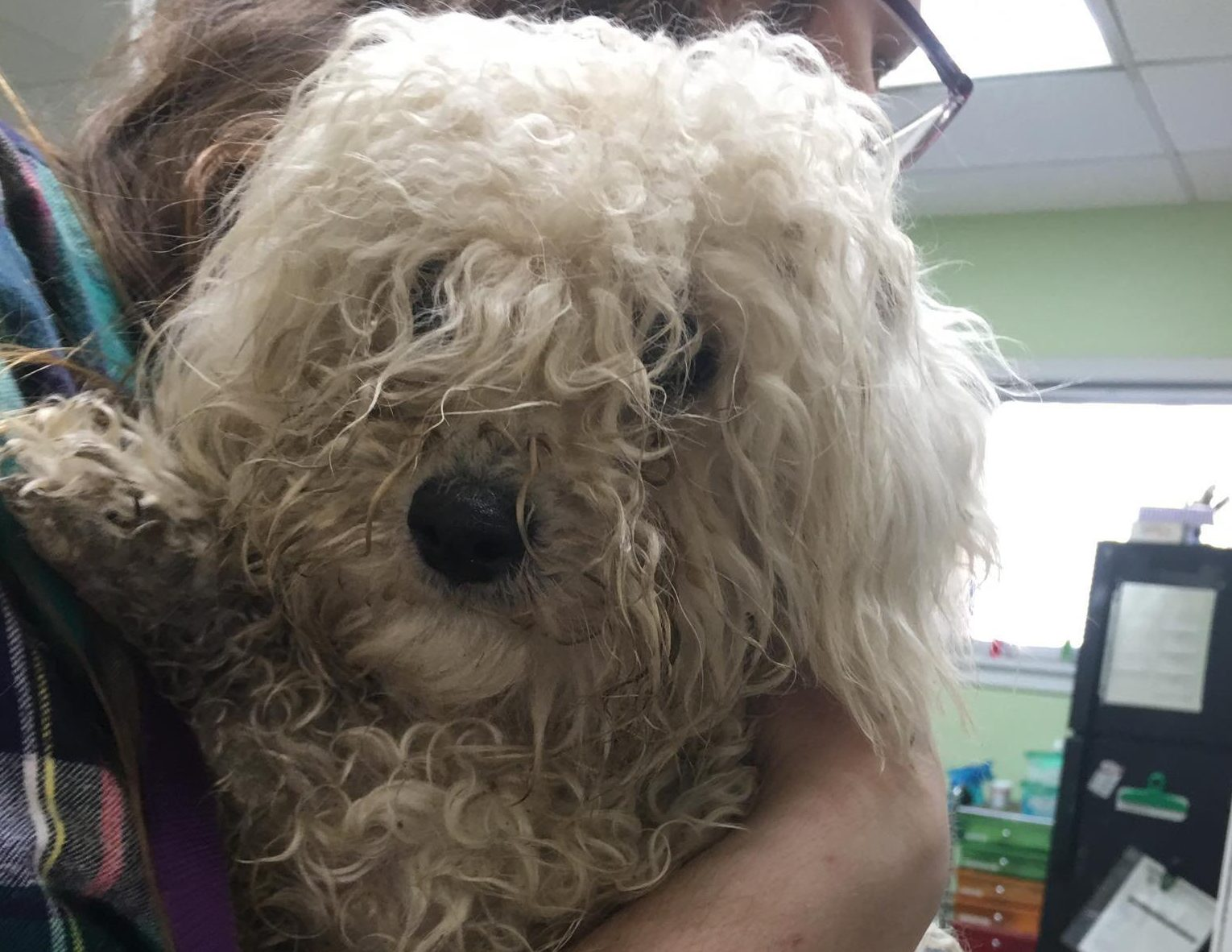 METRO GRAB - Facebook Furry Friends Refuge - no permission Dumped dogs were so matted they couldn't move https://www.facebook.com/pg/ffrefuge/photos/?ref=page_internal Credit: Furry Friends Refuge