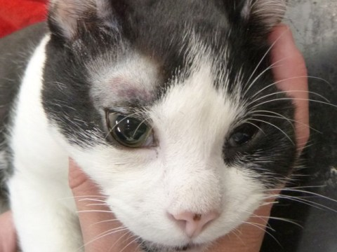 Kitten abused so badly he was left blind and with a disconnected jaw