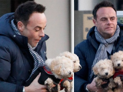 Ant McPartlin can't handle the cuteness of his new Maltipoos as he expands pet family with Anne-Marie Corbett