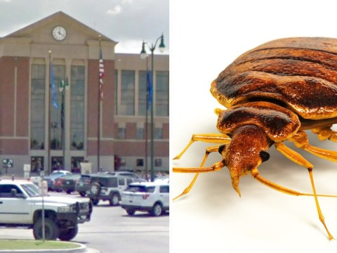 Lawyer causes court evacuation after 'abundance' of bed bugs pours from his suit