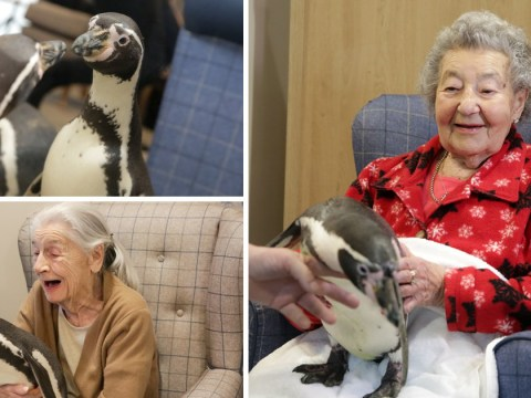 92-year-old's dream of meeting a penguin finally comes true