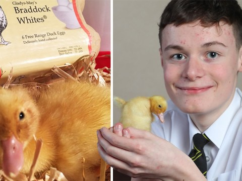 Teenage boy hatches duck egg he bought from Waitrose