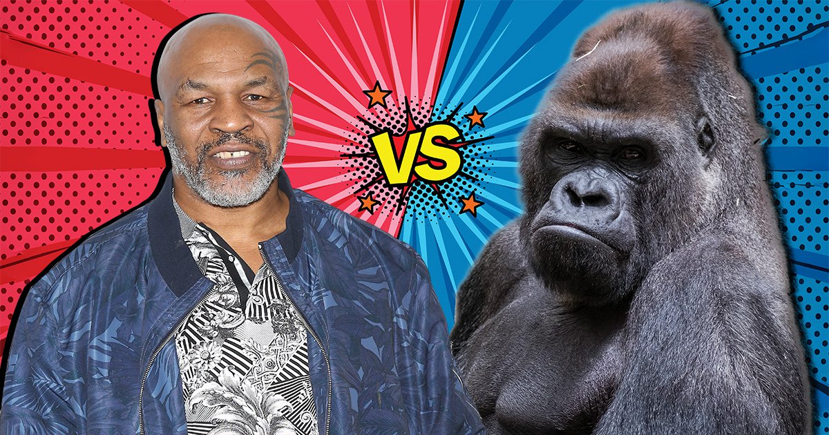 Mike Tyson once offered a zookeeper $10,000 to fight a gorilla
