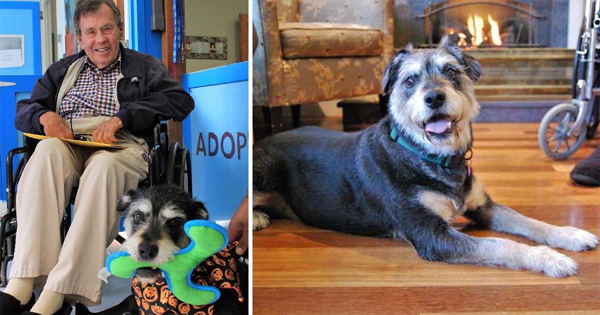 Man's dying wish is to find his dog a new home