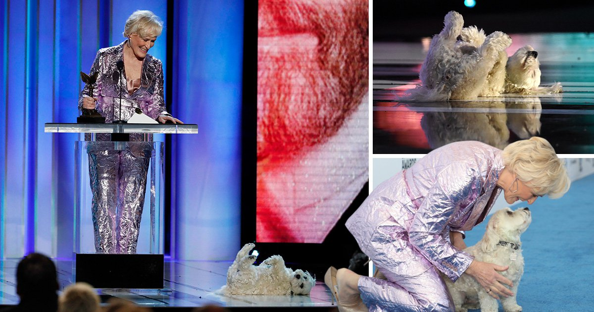 Glenn Close's adorable dog Pip steals the show at Independent Spirit Awards