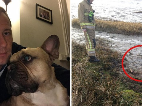 'Dopey' dog digs up unexploded shell from Second World War