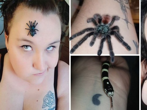 Woman turns spare bedroom into haven for tarantulas and snakes