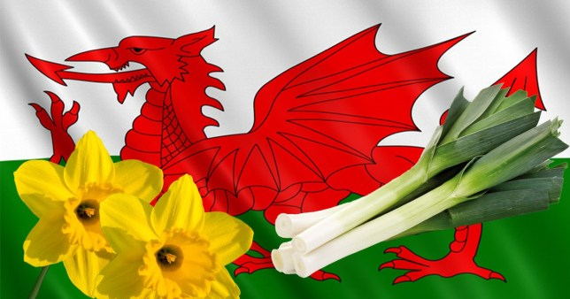happy st david's day' in welsh - photo #17