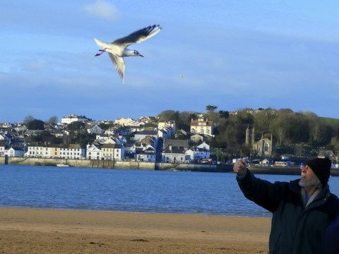 Seagull flies every day to visit 80-year-old man who saved his life