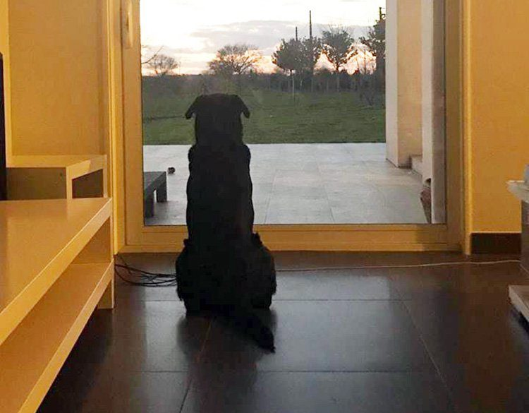 Emiliano Sala's dog is waiting for him to come home