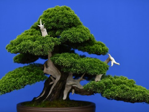 Couple beg thieves to return bonsai trees that are 'like our children'
