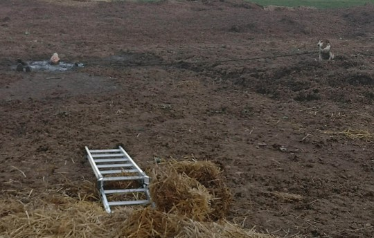 A DOG walker was trapped up to his neck in manure after trying to rescue his pooch from the same huge pile of festering dung. Remarkable pictures show how rescue teams battled to extract the man and dog from the foul-smelling heap in rural Bedfordshire on Sunday. Rescuers donned dry suits and lay on inflatable mattresses to spread their weight as they battled for an hour to save the pair from the mire a few miles south-east of Bedford. The man and his dog were checked over after their release and found to be none the worse for wear. The stinking SOS mission was reported by the community fire station in Sandy who posted two images of rescue teams in action.