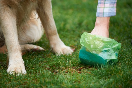 Man fined ?1,500 for refusing to clear dog's mess from his own garden Responsible care of pet