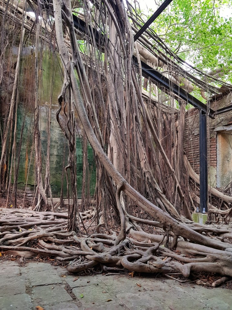 Inside Anping Tree House (Picture: Qin Xie)