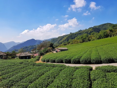 Head to Tainan and Alishan if you want to see more of Taiwanese culture
