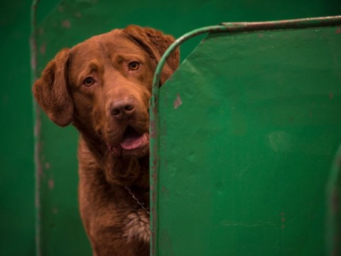 Crufts 2019 Best in Show winner odds and how to watch