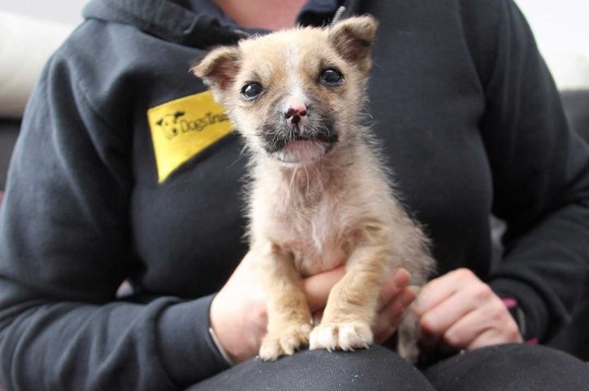 Puppy dumped in field 'would have been dead within an hour' if it
