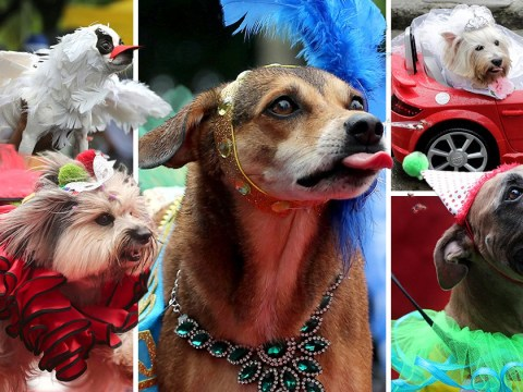 Dogs dress up for Blocao parade at Rio carnival